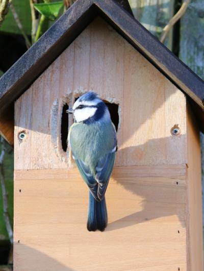 Journée d'ateliers avec la Ligue de Protection des Oiseaux