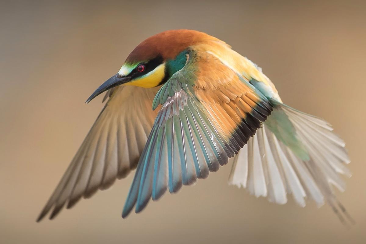 """Exposition """"À vol d'oiseaux"""""""