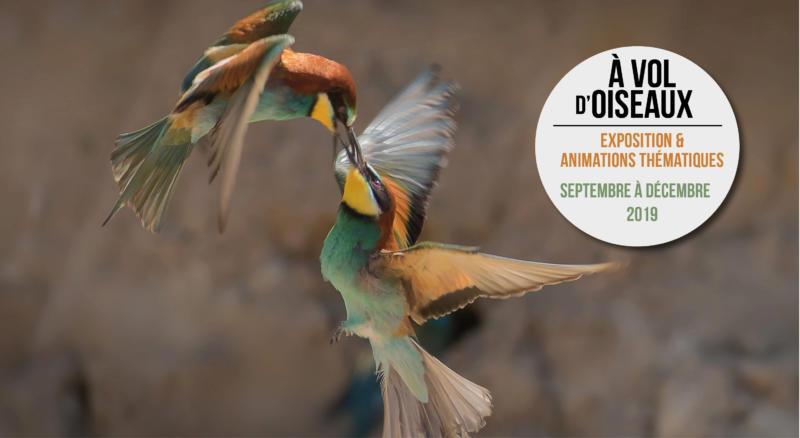 """Animations et exposition thématiques """" À vol d'oiseaux"""""""